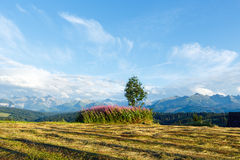 Summer mountain evening and field Royalty Free Stock Photography