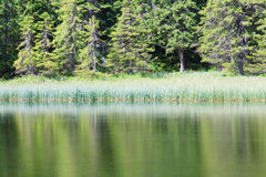 Summer mountain forest lake Royalty Free Stock Images