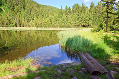Summer mountain forest lake Royalty Free Stock Photos