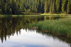 Summer mountain forest lake Royalty Free Stock Photography