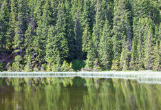 Summer mountain forest lake Stock Images