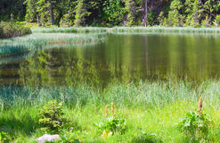 Summer mountain forest lake Stock Image