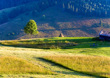 Summer mountain grassland landscape Stock Images