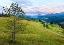 Summer mountain grassland landscape Stock Image