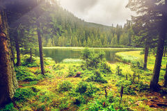 Summer Mountain Lake Forrest Royalty Free Stock Photography