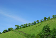 Summer mountain landscape. Summer landscape. Green hill and blue sky Royalty Free Stock Image