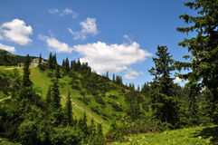 Summer Mountain Landscape Stock Image