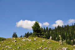 Summer Mountain Landscape Royalty Free Stock Photos