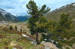 Summer mountain landscape (Fluela Pass, Switzerland) Stock Image