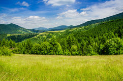 Summer mountain landscape, green hills and trees in the warm sun Royalty Free Stock Photo