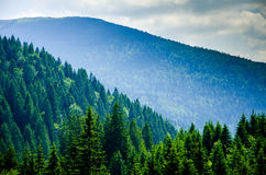 Summer mountain landscape, green hills and trees in the warm sun Royalty Free Stock Image