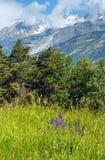 Summer mountain landscape (Alps, Switzerland) Royalty Free Stock Photography