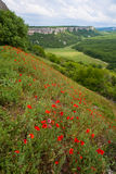 Summer mountain landscape with red poppy flowers Stock Photography