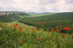 Summer mountain landscape with red poppy flowers Royalty Free Stock Images