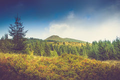Summer mountain landscape at sunshine. Hiking trail in the hills. Royalty Free Stock Photos