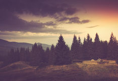 Summer mountain landscape. Tourist tents near forest. Royalty Free Stock Photos