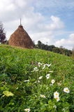 Summer mountain meadow. Summer mountain green meadow with stacks of hay (Carpathian Mt-s, Ukraine Stock Images