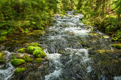 Summer mountain stream in the forest Stock Photo