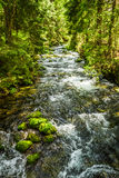 Summer mountain stream in the forest Stock Photos