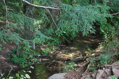 A summer mountain stream. Royalty Free Stock Image
