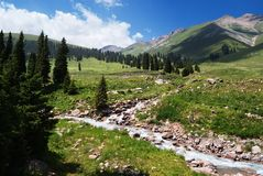 Summer mountain valley Stock Photography