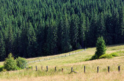 Summer mountain view (Carpathian, Ukraine). Royalty Free Stock Photos