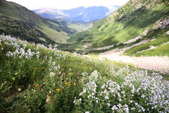 Summer mountain view  with flowers. (Caucasus, Russia Stock Photos