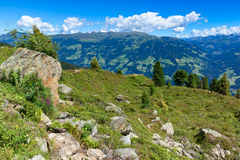 Summer mountain view with green meadow and stones in the foreground. Austria, Tirol, Zillertal Stock Photo