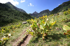 Summer mountain view. In valley. Caucasus Stock Photo