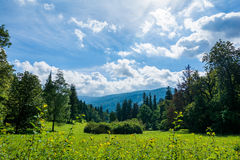 Summer in the mountains. Green meadow with flowers and trees, on a sunny summer day in the mountains, under blue skies and bright white clouds Stock Photo
