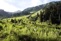 Summer in mountains. Kimasarovskoe canyon in the mountains of Trans-Ili Alatau district of Almaty. In the background the mountain Furmanivka height of 3000 Royalty Free Stock Images