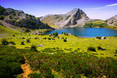 Summer mountains landscape with lake Stock Photos