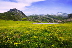 Summer mountains landscape with lake and pasture Royalty Free Stock Images