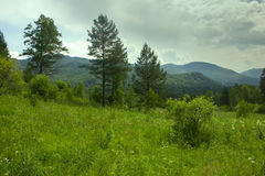 Summer mountains landscape with trees. Stock Photos