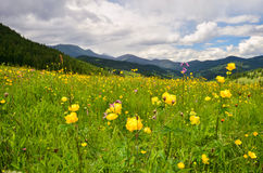 Summer is in mountains Royalty Free Stock Photo