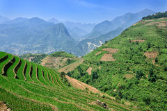 Summer mountains rice terraces in Sapa. North Vietnam Stock Photo