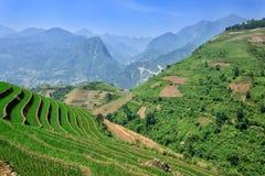 Summer mountains rice terraces in Sapa Stock Photo