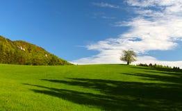Summer in mountains, rock, green bush stock photo
