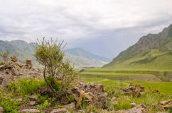 Summer mountains with tree. Altai green landscape Royalty Free Stock Photo