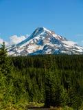 Summer Mt Hood stock image