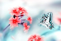 Summer natural background. Beautiful multicolored butterfly on red flowers. Natural summer artistic image royalty free illustration