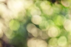 Summer natural background with bokeh, blurred abstract image. Summergreen light natural background with bokeh, blurred abstract blurre image royalty free stock images