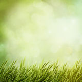 Summer natural backgrounds Royalty Free Stock Photo