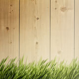 Summer natural backgrounds Stock Image