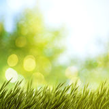 Summer natural backgrounds. For your design Royalty Free Stock Image