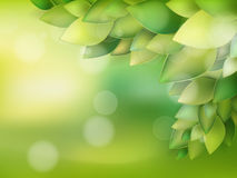 Summer natural backgrounds for your design. EPS 10 Stock Images