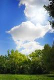 Summer nature Royalty Free Stock Image