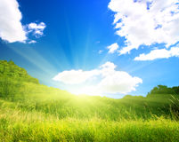 Summer nature Royalty Free Stock Images