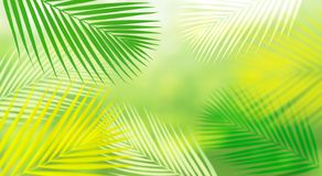 Summer and nature background with blur coconut leaf.fresh green tropical garden.For key visual banner