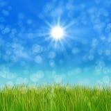 Green grass and blue sky. Summer nature background with 3d green grass and blue sky Stock Photography